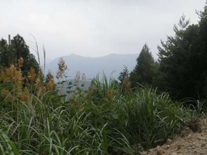 額田林道002