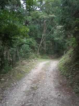 額田林道003