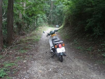 額田林道007