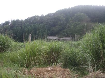 額田林道013