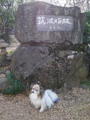 2013筑波山2