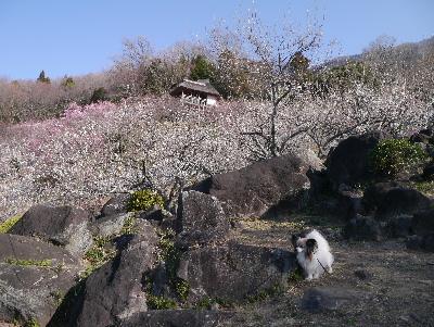 2013筑波山15