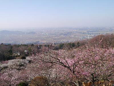 2013筑波山16
