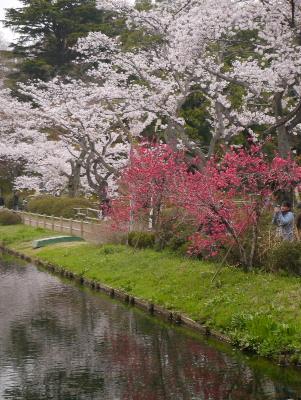 2013清水公園1