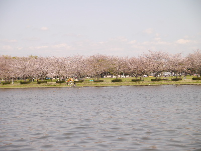 2013水元公園2
