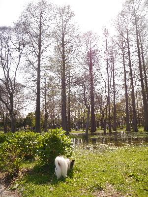 2013水元公園3