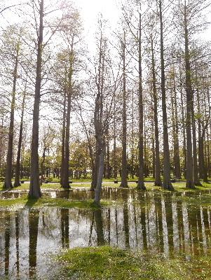 2013水元公園5