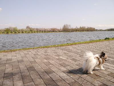 2013水元公園7