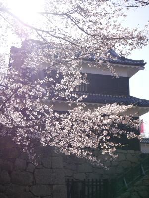 2013上田城15