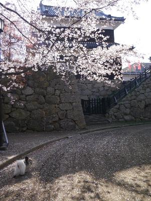 2013上田城16