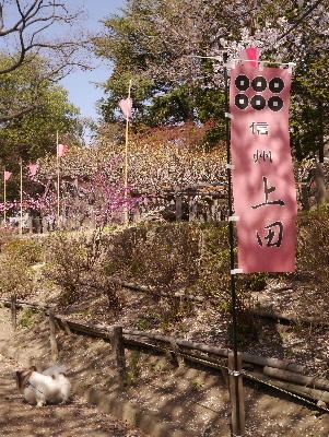 2013上田城2−16