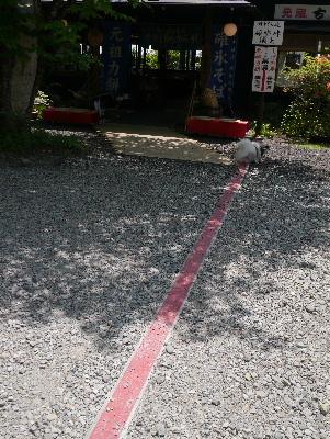 軽井沢旅行記14