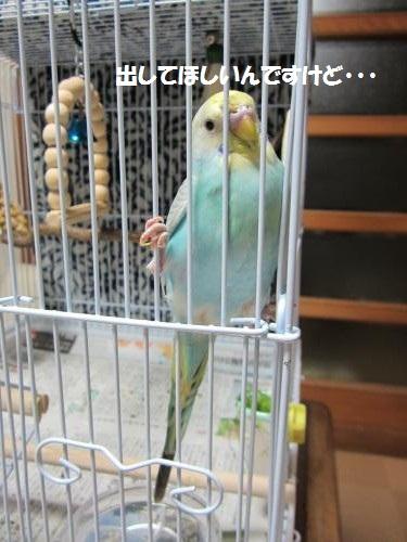 IMG_0656_convert_20120917042049.jpg