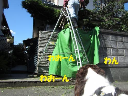 IMG_1468_convert_20121108101202.jpg