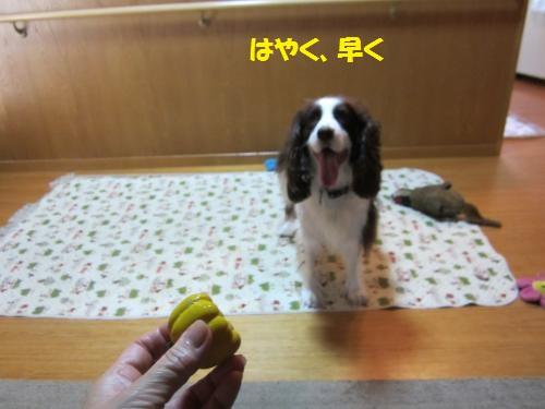 IMG_2046_convert_20121108101944.jpg