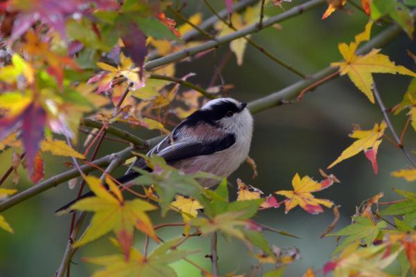 秋のえなが_convert_20121128204219