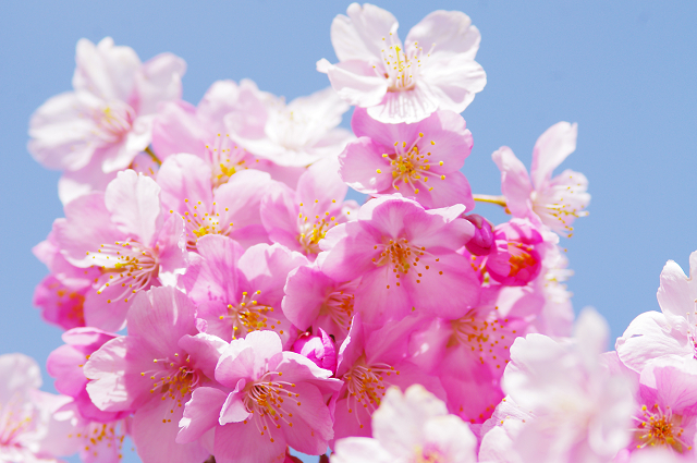2012,90217 桜②