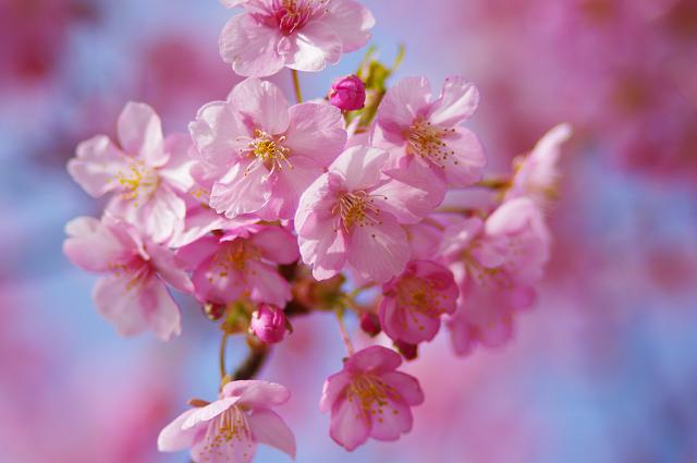 2012,90219 桜④