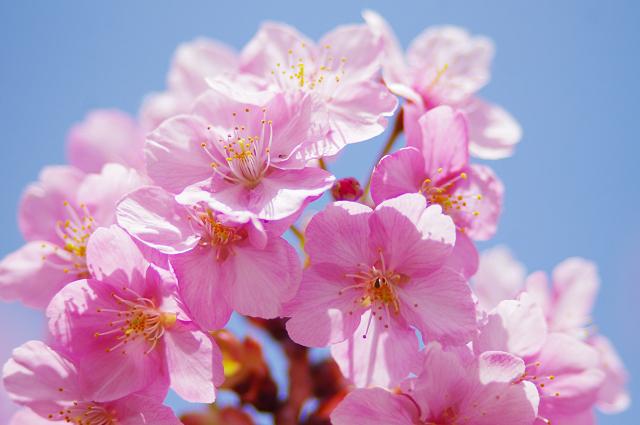 2012,90216 桜①