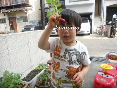 DSCN7227_convert_20120528230151.jpg