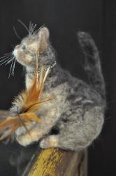 キッカーと猫201411100013(1)