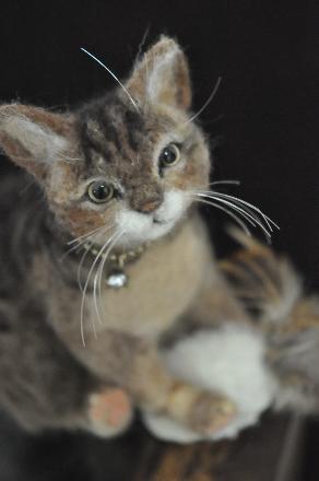 キッカーと猫201411100017(1)