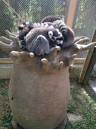 動物園201411090001