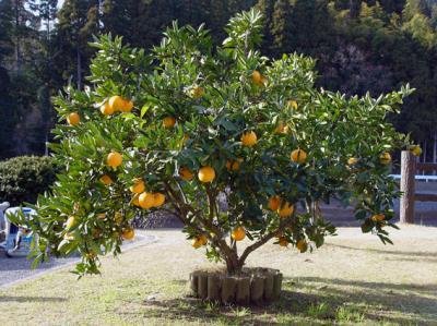 Orange_convert_20121224233815.jpg
