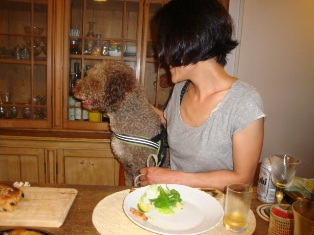 日本ではあまり見かけない犬種だそうです