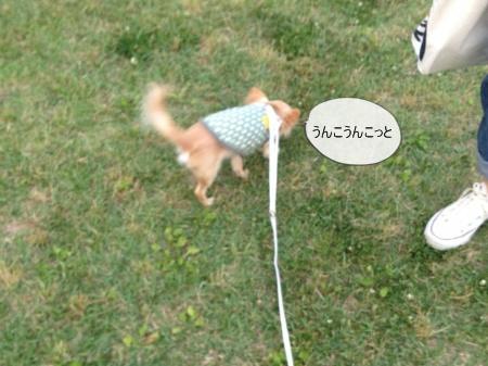 new_new_写真 (1)