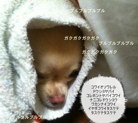 new_写真 (1)