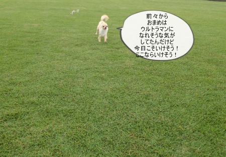 new_090.jpg