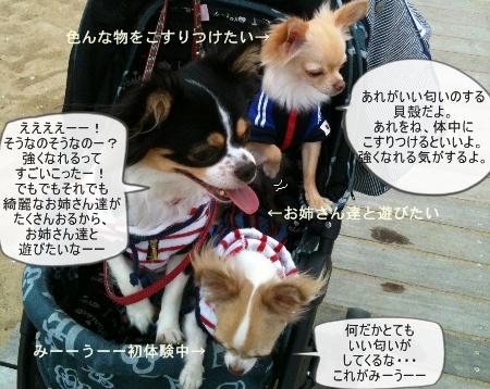 new_467.jpg
