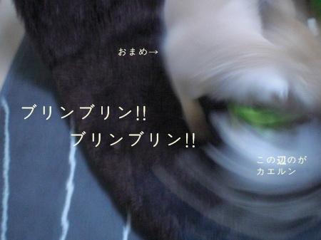 new_CIMG2911.jpg