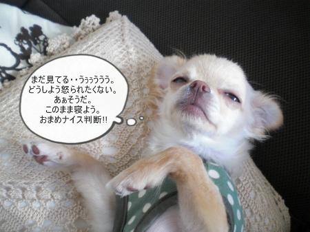 new_CIMG2936.jpg