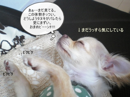 new_CIMG2939.jpg