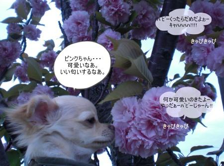 new_CIMG2952.jpg