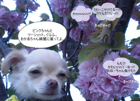 new_CIMG2953.jpg