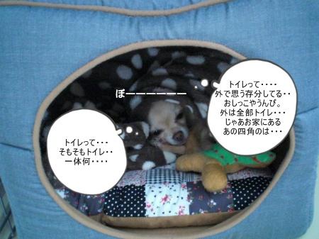 new_CIMG3097.jpg