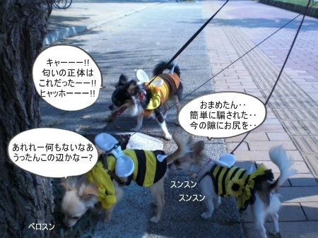 new_CIMG3116_20120507232646.jpg