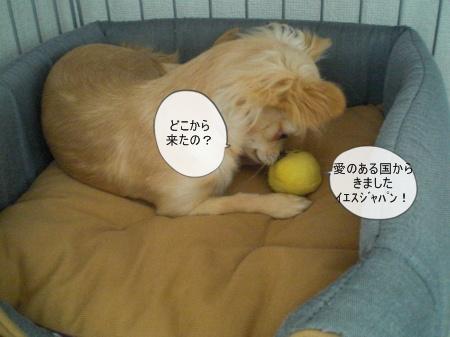 new_CIMG3238.jpg