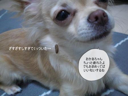 new_CIMG3274.jpg