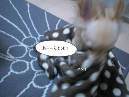 new_CIMG3291.jpg