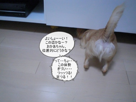 new_CIMG3381.jpg