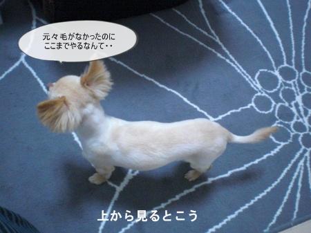 new_CIMG3459.jpg