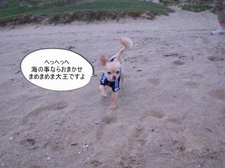 new_CIMG3801.jpg