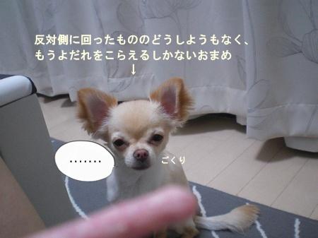 new_CIMG3822.jpg