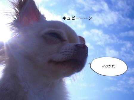 new_CIMG4508.jpg