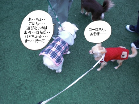 new_CIMG4627.jpg