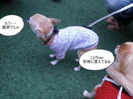 new_CIMG4630.jpg